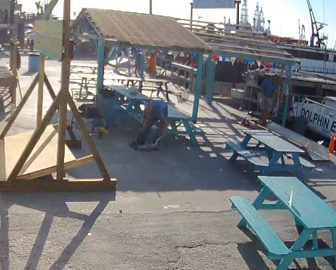Dolphin Dock Charters Cam in Port Aransas