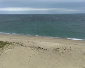 Great Point Beach Webcam in Nantucket