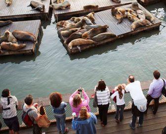 Pier 39 Sea Lions Cam