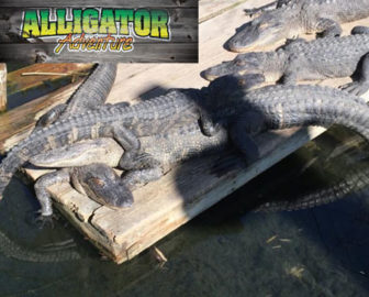 Alligator Adventure - North Myrtle Beach