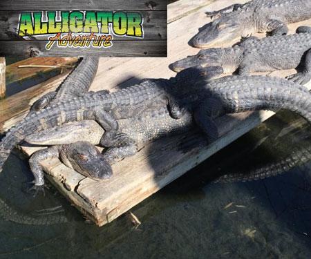 Alligator Adventure - North Myrtle Beach