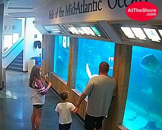 Atlantic City, NJ Aquarium Live Cam