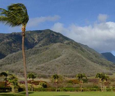 Maui Tropical Plantation Webcam Maui, HI