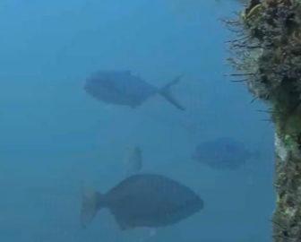 Underwater Cam at Deerfield Pier