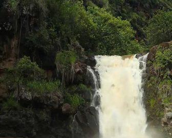 Waimea Falls Live Cam from Oahu Island