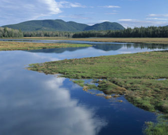Bass Harbor Marsh Webcam