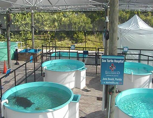 Sea Turtle Cam from Loggerhead Marinelife Center