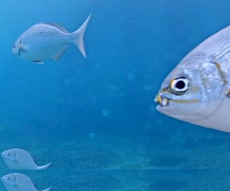 Underwater Cam at Deerfield Pier, Florida