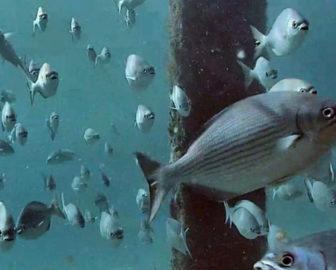 Deerfield Pier Underwater Cam