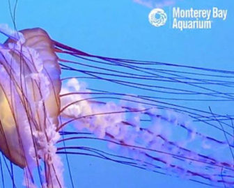 Jelly Cam by Monterey Bay Aquarium