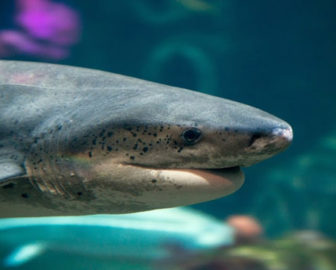 Live Shark Cam by Monterey Bay Aquarium