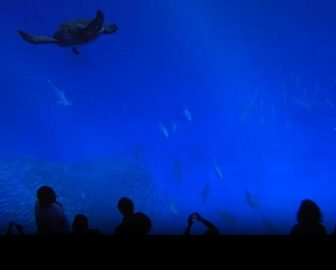 Monterey Bay Aquarium Open Sea Cam