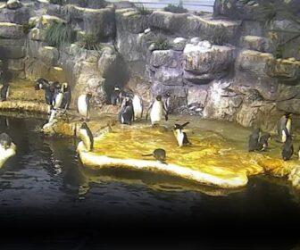 Moody's Garden Penguin Cam