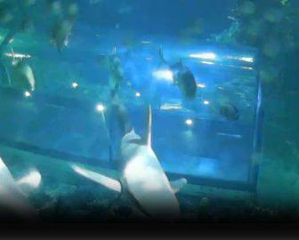 Moody's Garden Aquarium Underwater Cam, Galveston, TX
