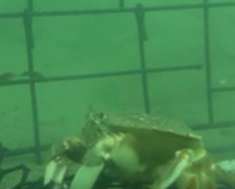 Underwater Video Cam Dillon Beach, CA