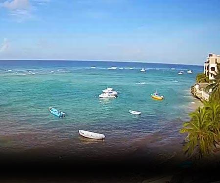 Yellow Bird Hotel Webcam in Barbados, Caribbean Islands, Resort Beach Vacation