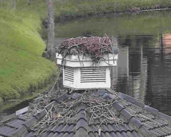 Atlantic Beach Live Osprey Cam