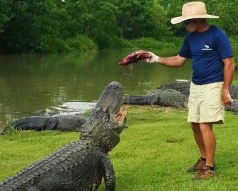 Alligator Alley Webcam