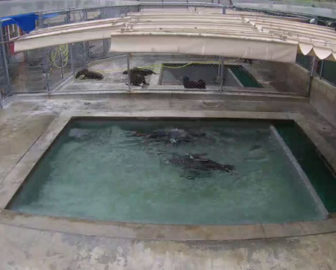 Pacific Marine Mammal Center Pool Cam Laguna Beach