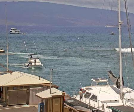Lahaina Harbor & Breakwall Webcam in Maui Hawaii