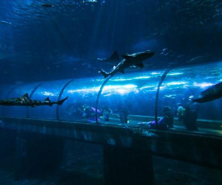 Oregon Coast Aquarium Shark Cam Live