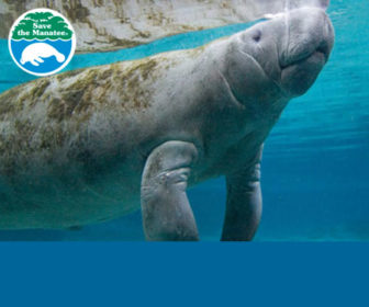 Manatee Underwater Webcam Highlights, Florida