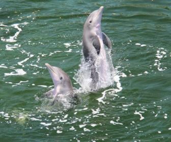 Dolphins Plus Bayside Webcam, Key Largo FL