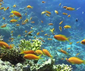 Calm Relaxing Underwater Sea Life Webcam