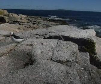 Audubon's Project Puffin Live Cam, Rockland Maine