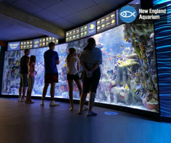 New England Aquarium Giant Ocean Tank Live Cam, Boston MA