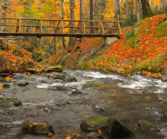 Scenic Autumn Views & Relaxing Sounds of Gentle Stream