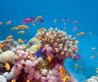 Harbour Village Bonaire Coral Reef Cam, Coral Gables, Florida