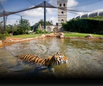 Mike the Tiger LSU Campus Cam, Baton Rouge LA