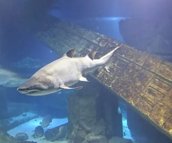 Long Island Aquarium Live Shark Tank Cam