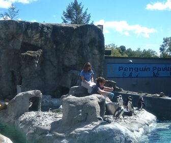 Mystic Aquarium Penguin Live Cam